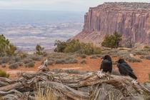 USA, Utah, Canyonlands National Park von Danita Delimont