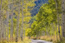 USA, Utah, Uinta Mountains von Danita Delimont