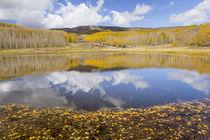 USA, Utah, Dixie National Forest von Danita Delimont