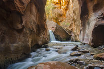 Kanarra Creek Waterfall and Trees behind waterfall, Zion Nat... by Danita Delimont