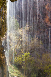 USA, Utah, Zion National Park, Weeping Rock. von Danita Delimont