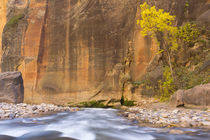 USA, Utah, Zion National Park by Danita Delimont