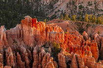 Bryce Canyon National Park Utah, USA. by Danita Delimont