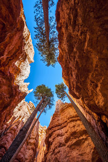 Wall Street, Bryce Canyon National Park, Utah, USA. von Danita Delimont