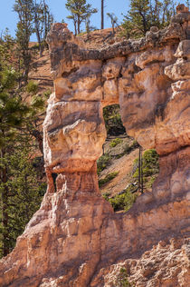Tower Bridge rock formation, Bryce Canyon National Park, Utah, USA. by Danita Delimont