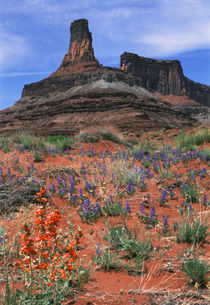 USA, Utah, Canyonlands National Park, Dead Horse Point State... by Danita Delimont