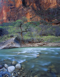 Zion National Park, Utah by Danita Delimont