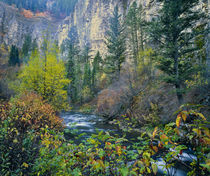 USA. Along Logan River in autumn. Logan Canyon. Bear River R... by Danita Delimont