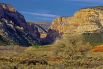 An isolated location in Dinosaur National Monument, Utah von Danita Delimont