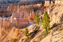 Trees grow in Limestone at Bryce Canyon National Park by Danita Delimont