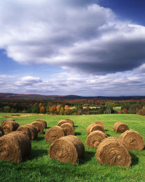 USA, Vermont, Westmore, Hay bales in field by Danita Delimont