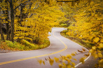 Curvy road in autumn near Smugglers Notch, Stowe, Vermont, USA. by Danita Delimont