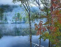 Emerald Lake in fog, Emerald Lake State Park, Vermont von Danita Delimont