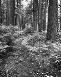 USA, Washington State, Olympic National Park, Path through o... von Danita Delimont
