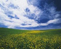 USA, Washington State, Eastern Washington, View of wild must... von Danita Delimont