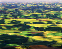 USA, Washington State, Eastern Washington, Palouse, Contour ... von Danita Delimont