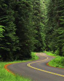USA, Washington State, Olympic National Park, Road through g... von Danita Delimont
