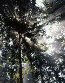USA, Washington State, Olympic National Park, Sunbeam passin... von Danita Delimont