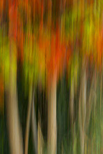 USA, Washington, Walla Walla County by Danita Delimont