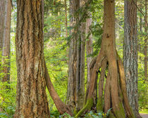 USA, Washington State, Millersylvainia State Park by Danita Delimont