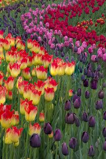 USA, Washington by Danita Delimont