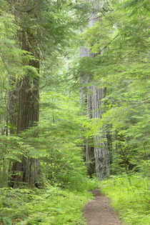 USA, Washington, Olympic National Forest by Danita Delimont