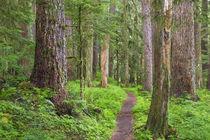 USA, Washington, Olympic National Park by Danita Delimont