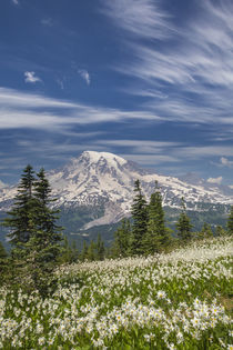 USA, Washington, Mount Rainier National Park by Danita Delimont