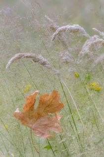 USA, Washington State, Seabeck by Danita Delimont