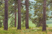 USA, Washington State, Palouse Hills by Danita Delimont