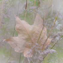 Leaf in Meadow by Danita Delimont