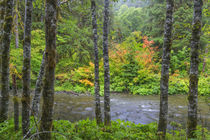 USA, Washington State, Olympic National Park by Danita Delimont