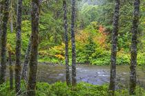 USA, Washington State, Olympic National Park von Danita Delimont