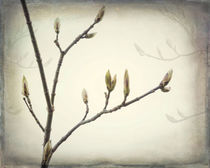 Spring Buds by Danita Delimont