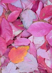 USA, Washington, John A Finch Arboretum, leaves by Danita Delimont