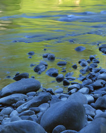 USA, Washington, Olympic National Park, Reflections in the Elwha River by Danita Delimont