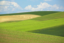 USA, Washington, Whitman County, Palouse, wheat fields by Danita Delimont