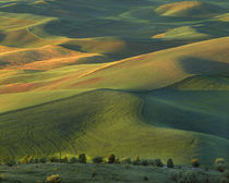 USA, Washington, Palouse, Whitman County, Steptoe Butte by Danita Delimont