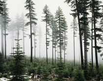 USA, Washington, Managed forest. by Danita Delimont