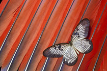 Paper Kite Tropical Butterfly on Scarlet Macaw Tail Feather Design von Danita Delimont