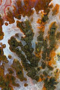 Plume Agate, Sammamish, Washington by Danita Delimont