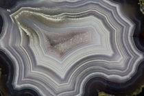 Banded Agate, Sammamish, Washington State by Danita Delimont