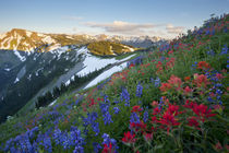 Washington state. A profusion of Indian Paintbrush and Lupin... von Danita Delimont