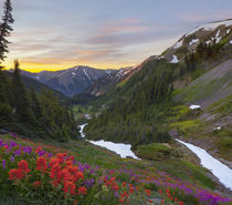 Washington state, Olympic National Park. Indian Paintbrush a... by Danita Delimont