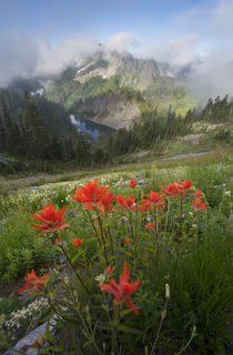 USA, Washington State, Mt von Danita Delimont