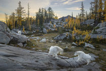USA, Washington State von Danita Delimont