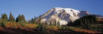 Mt. Rainier National Park, WA, sunrise on the southern slope... by Danita Delimont