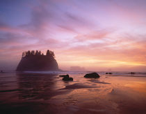 Sea Stacks at sunset, 2nd Beach, Olympic National Park, WA von Danita Delimont