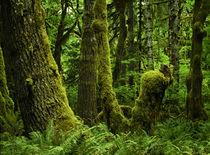 Quinnalt Rain Forest 1 by Danita Delimont