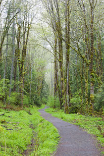 WA, Tiger Mountain State Forest, Forest Trail by Danita Delimont